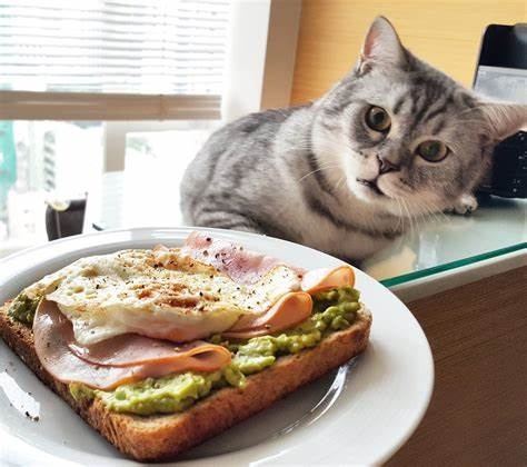 Healthy Foods to Give My Cat