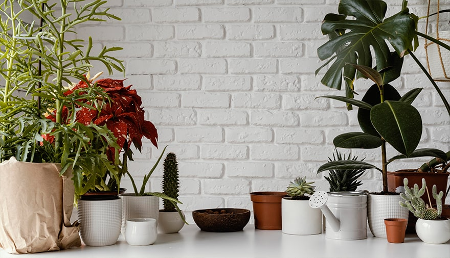 8 Best Plants to Improve Indoor Air Quality for Healthy Living
