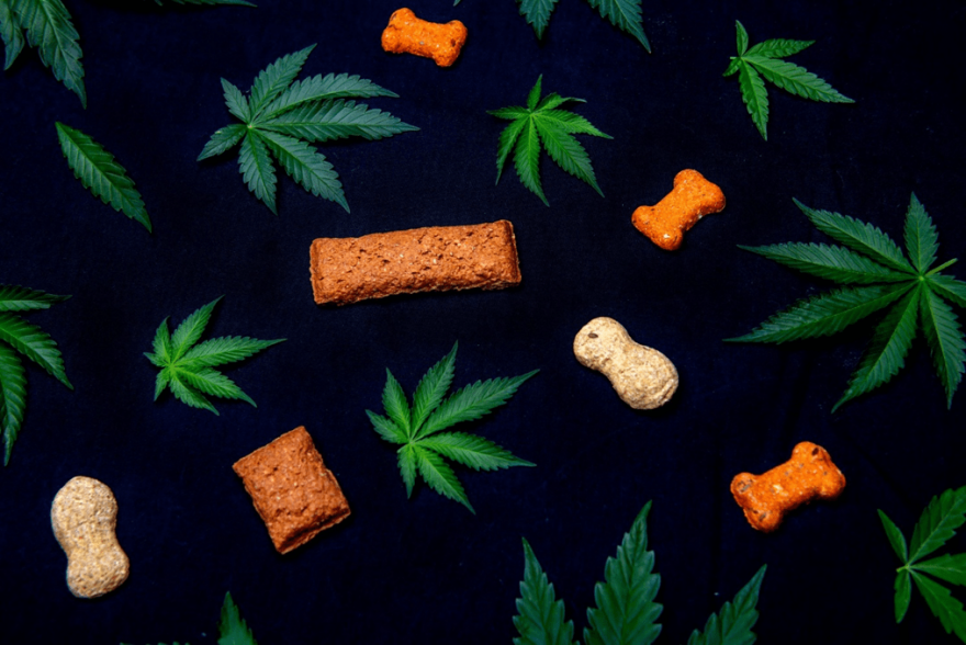 What's The Obsession With CBD Dog Treats