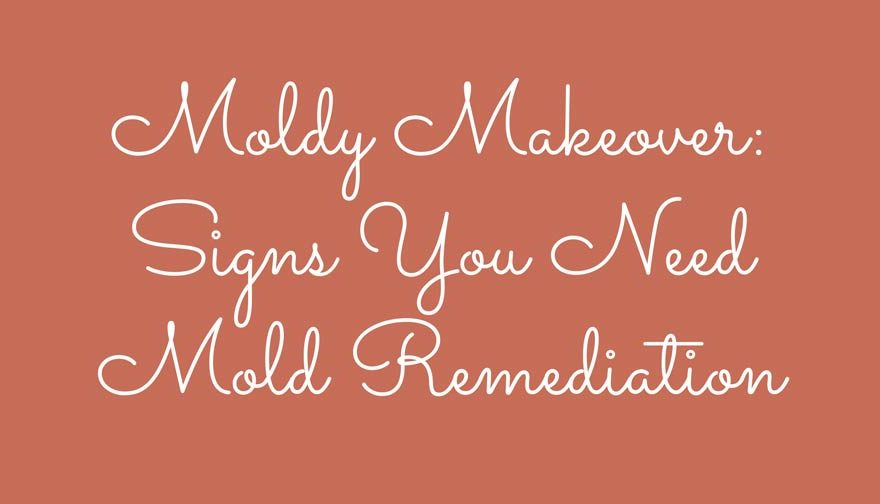 Moldy Makeover Signs You Need Mold Remediation